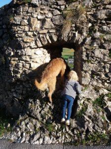 Kind und Hund entdecken die Welt